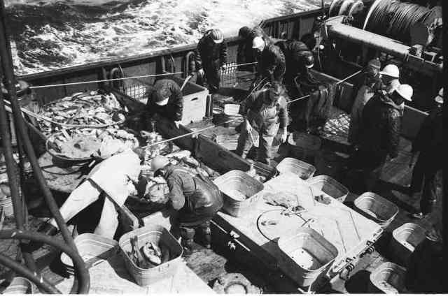 Sorting catch by species (Sig on right with watch cap) (Photo by Bob Hitz)