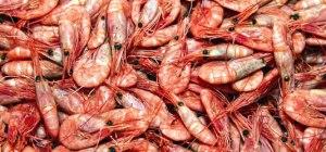 prd_shrimp