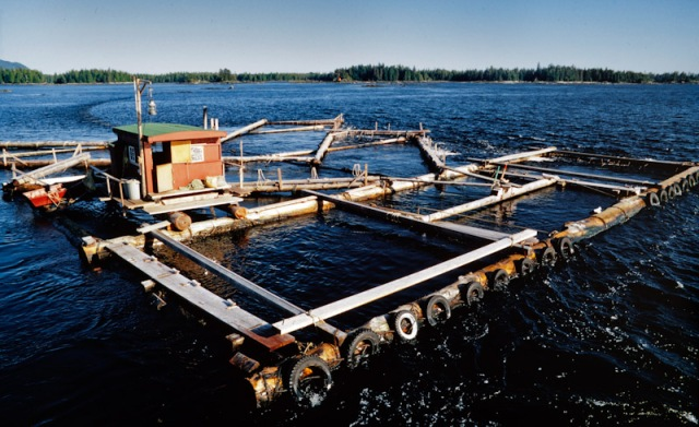 Alaskan Fish Trap,