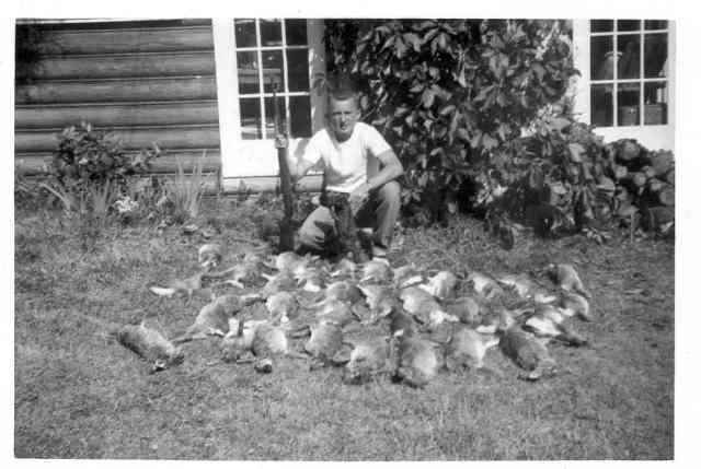 Jim's Rabbits