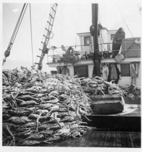Deck load of crab