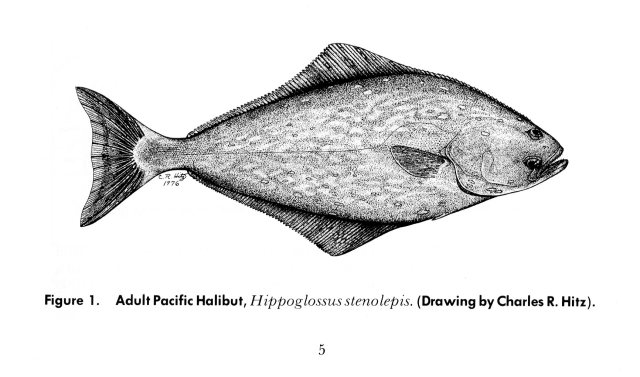 Pacific Halibut, by Charles Hitz