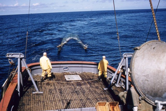The net is pulled to the stern, Hitz photo
